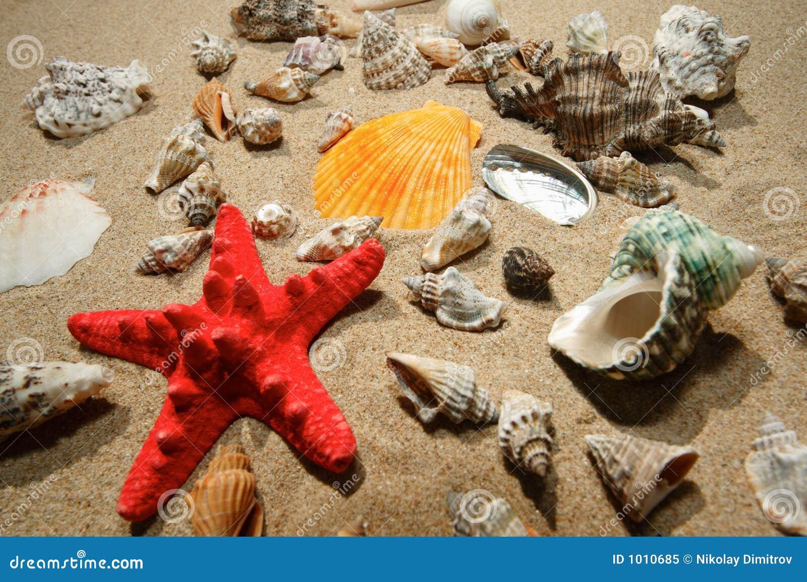 αστέρι κοχυλιών ψαριών τρο