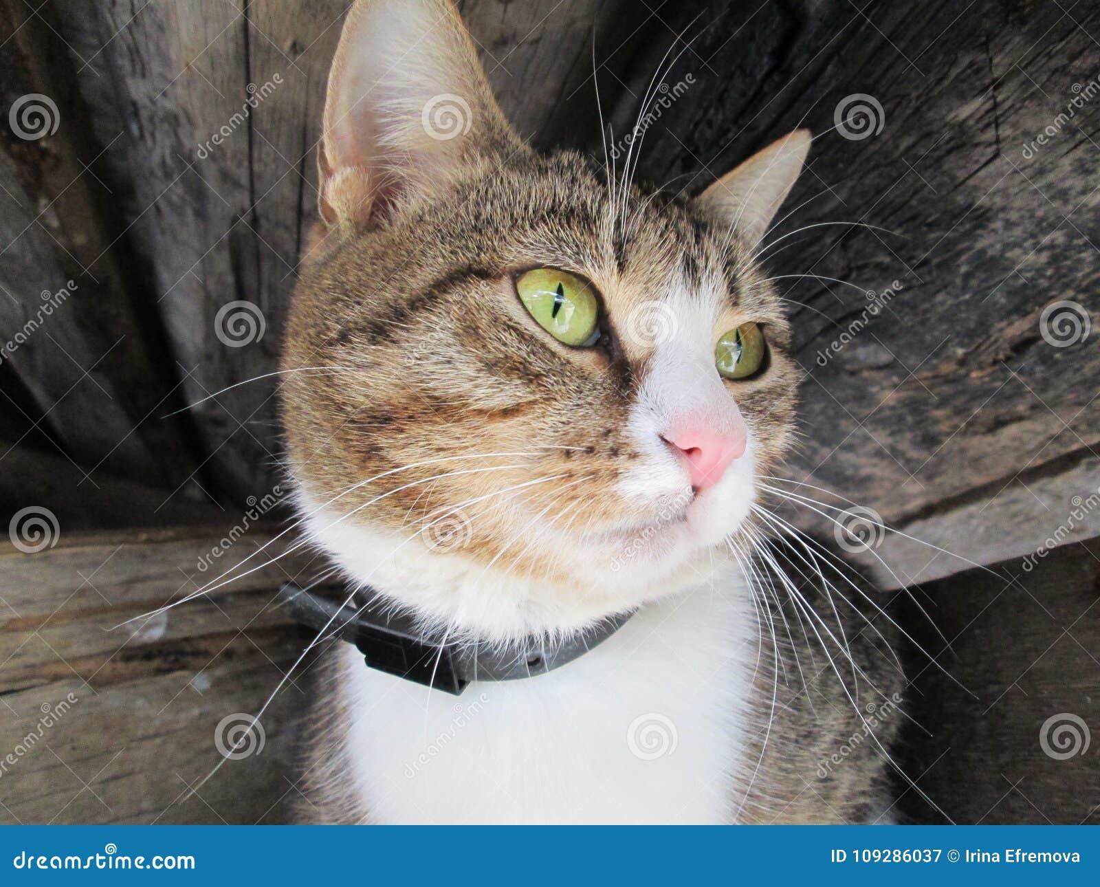Αστεία γάτα με τα μακριά μουστάκια