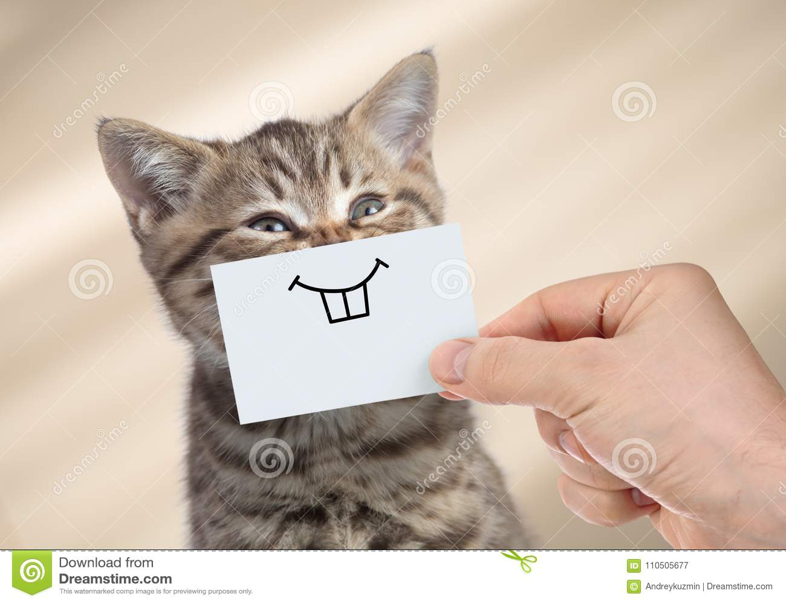 Αστεία γάτα με το χαμόγελο στο χαρτόνι