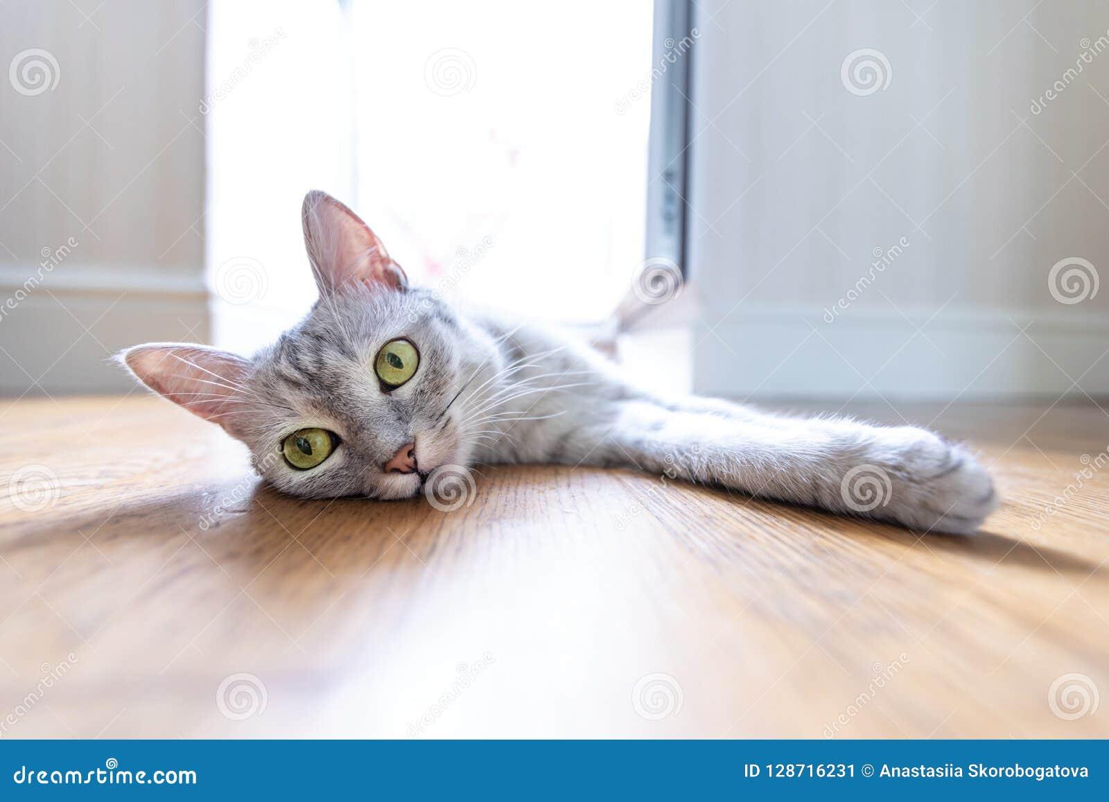 Αστεία γάτα στο σπίτι