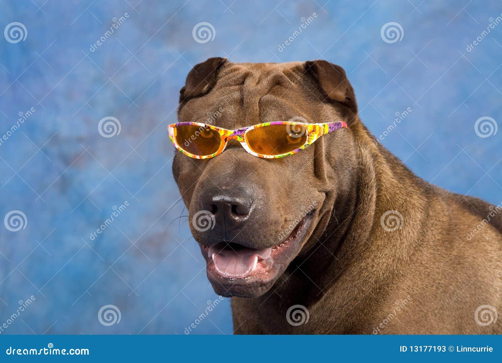 αστεία γυαλιά ηλίου sharpei σ&kappa