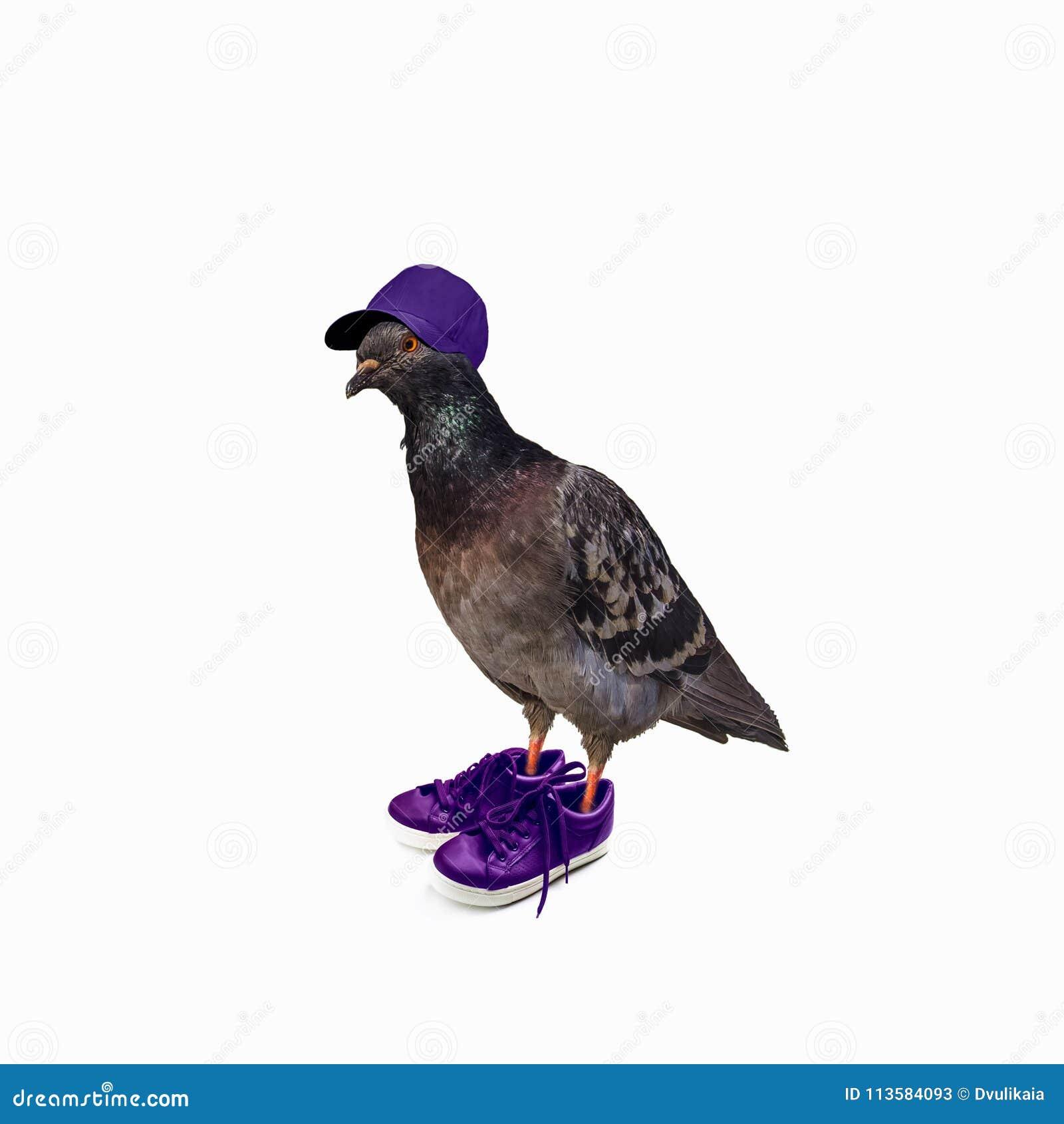 5f2538f6aee Αστείο περιστέρι στο ιώδες πορτρέτο κολάζ πάνινων παπουτσιών και μικτό  μέσων ΚΑΠ. Περισσότερες παρόμοιες στοκ εικόνες