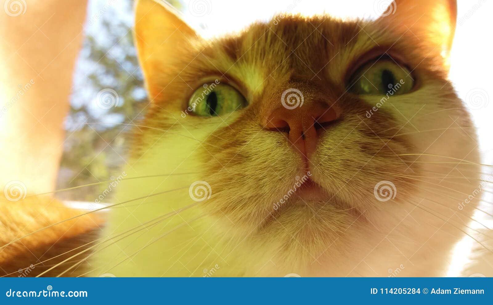 Αστείο πορτρέτο μιας κόκκινης γάτας