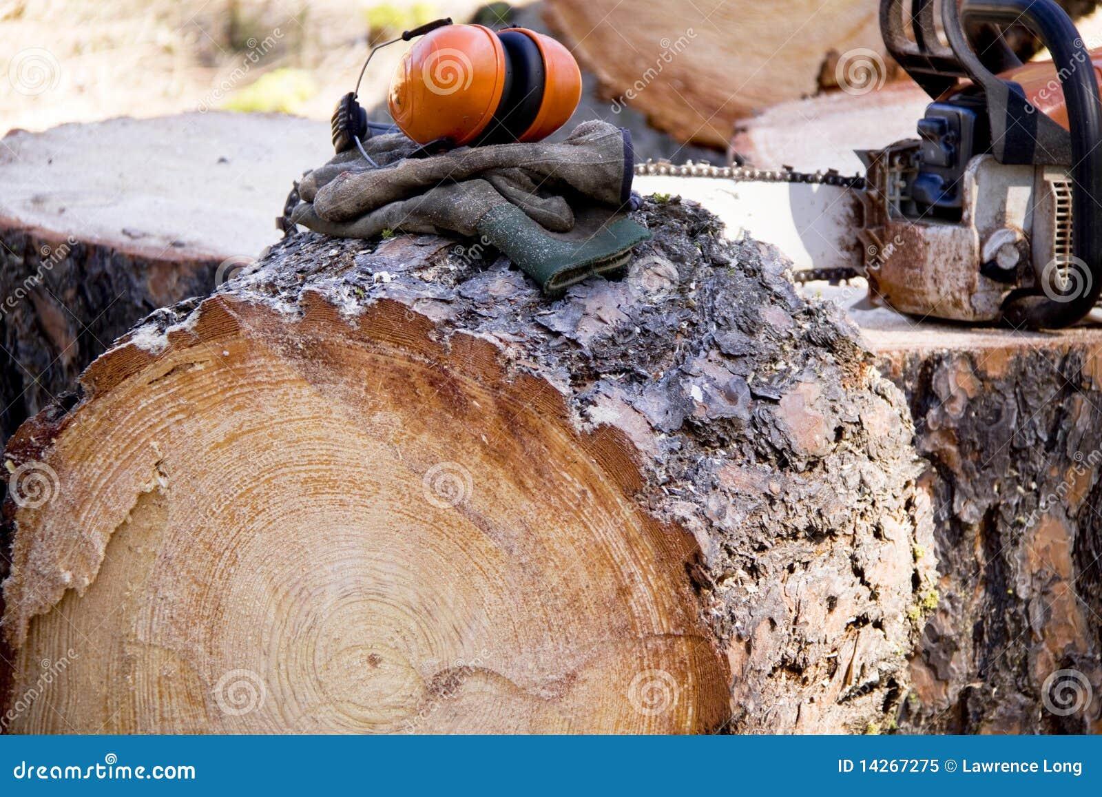 ασφάλεια εμπόρων ξυλεία&sigma