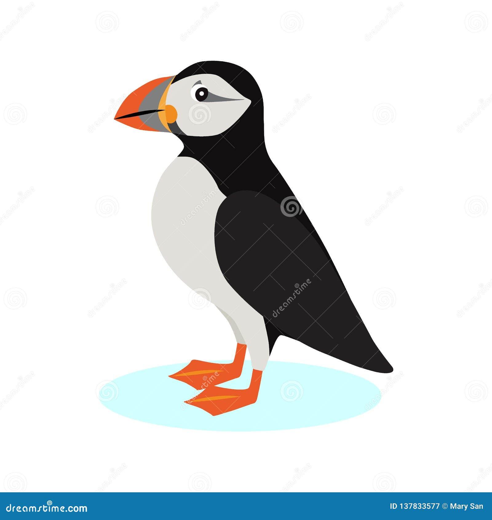 Ατλαντικό εικονίδιο puffin, πολικό πουλί με το ζωηρόχρωμο ράμφος που απομονώνεται στο άσπρο υπόβαθρο, είδη θαλασσοπουλιού, διάνυσ