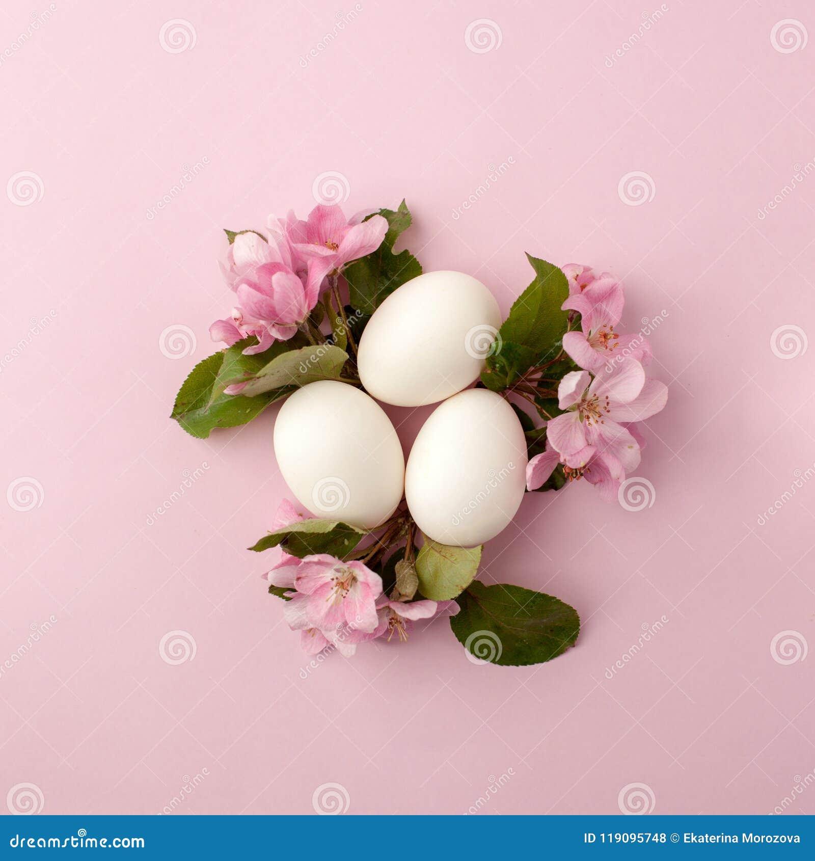 Αυγά Πάσχας και ρόδινα λουλούδια στο άσπρο υπόβαθρο Το επίπεδο φωλιών Πάσχας βάζει, τοπ άποψη, έννοια της άνοιξη, θηλυκότητα και