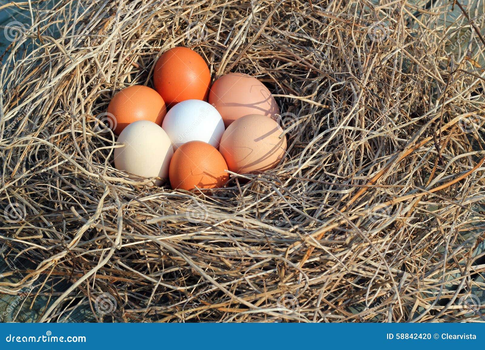 Αυγά σε μια φωλιά