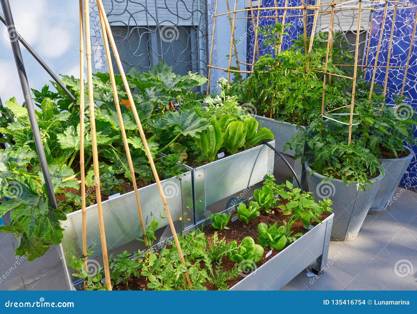 Αυξημένος αστικός κήπος οπωρώνων κρεβατιών
