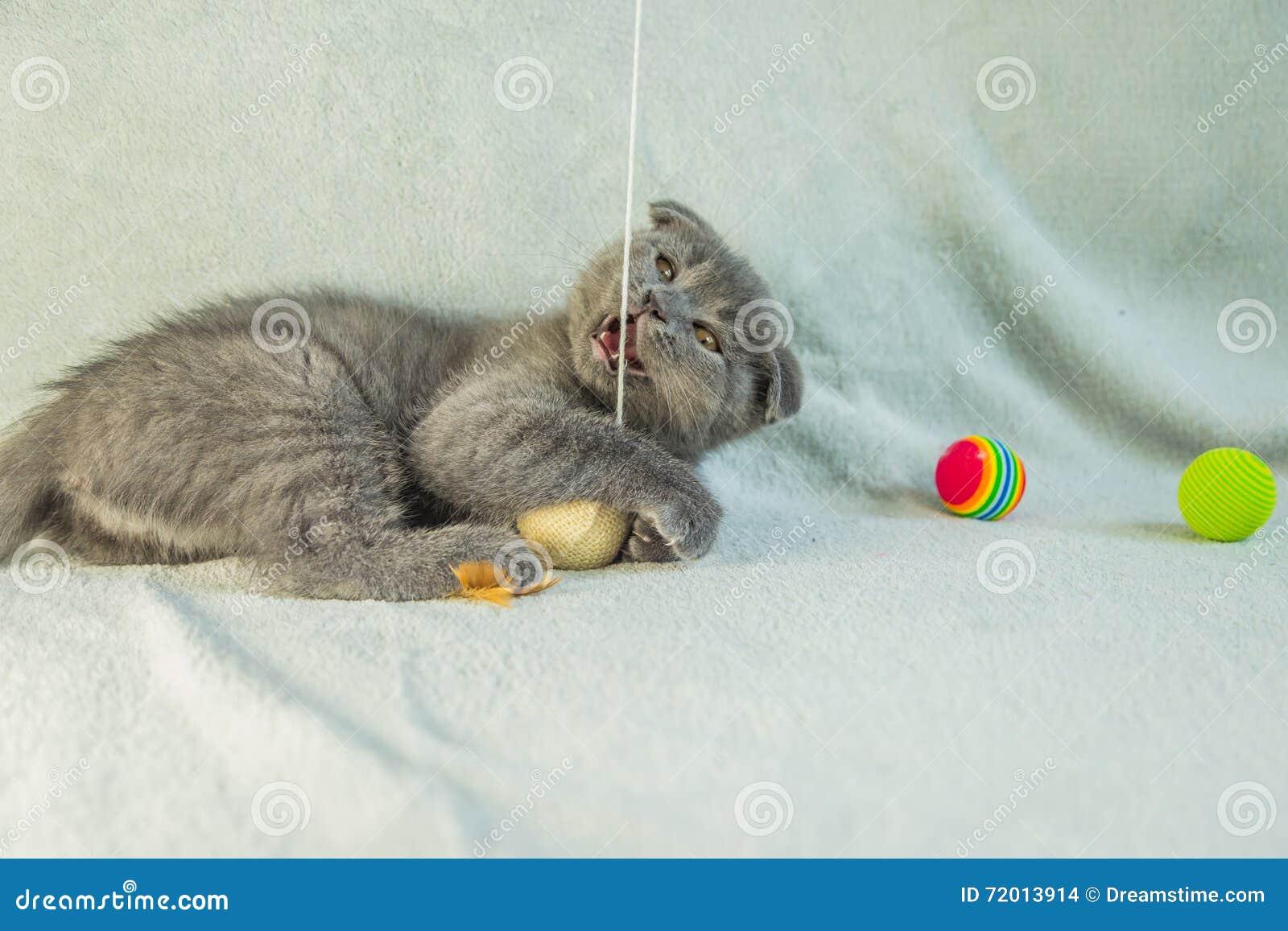 72908a5d8061 Download Αυταράς παιχνίδια γατακιών Γάτα της Σκωτίας