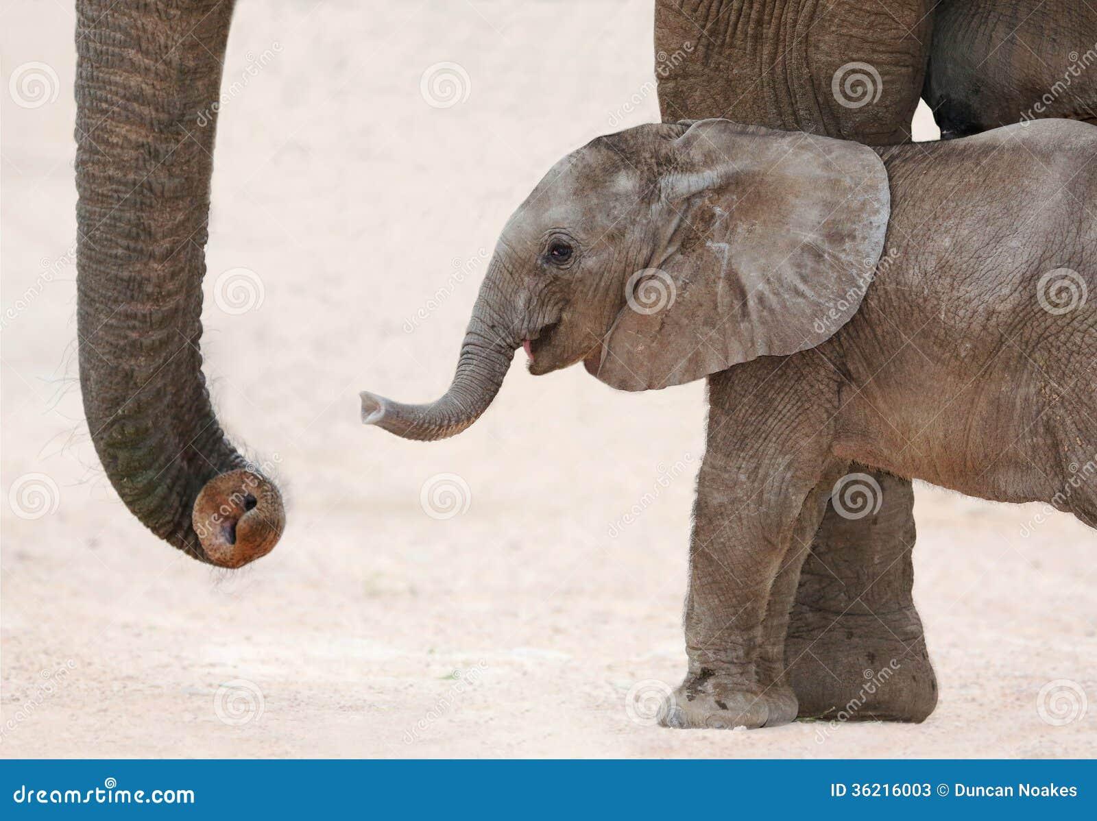Αφρικανικά μωρό και Mom ελεφάντων