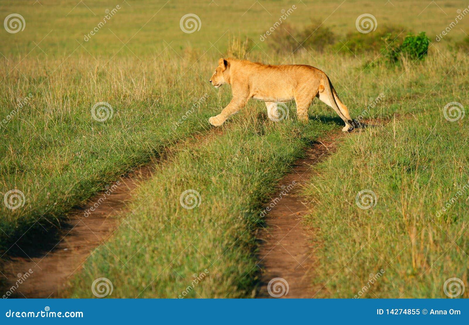 αφρικανικές άγρια περιοχέ