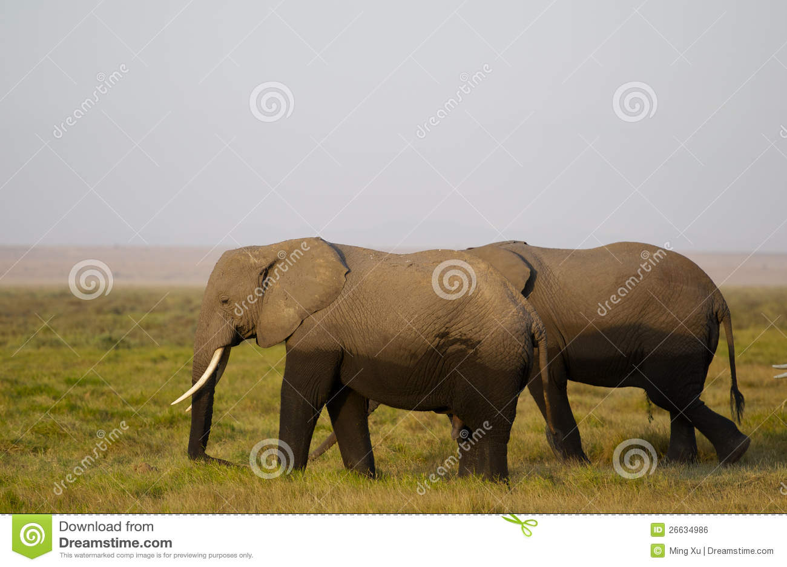 Αφρικανική οικογένεια ελεφάντων