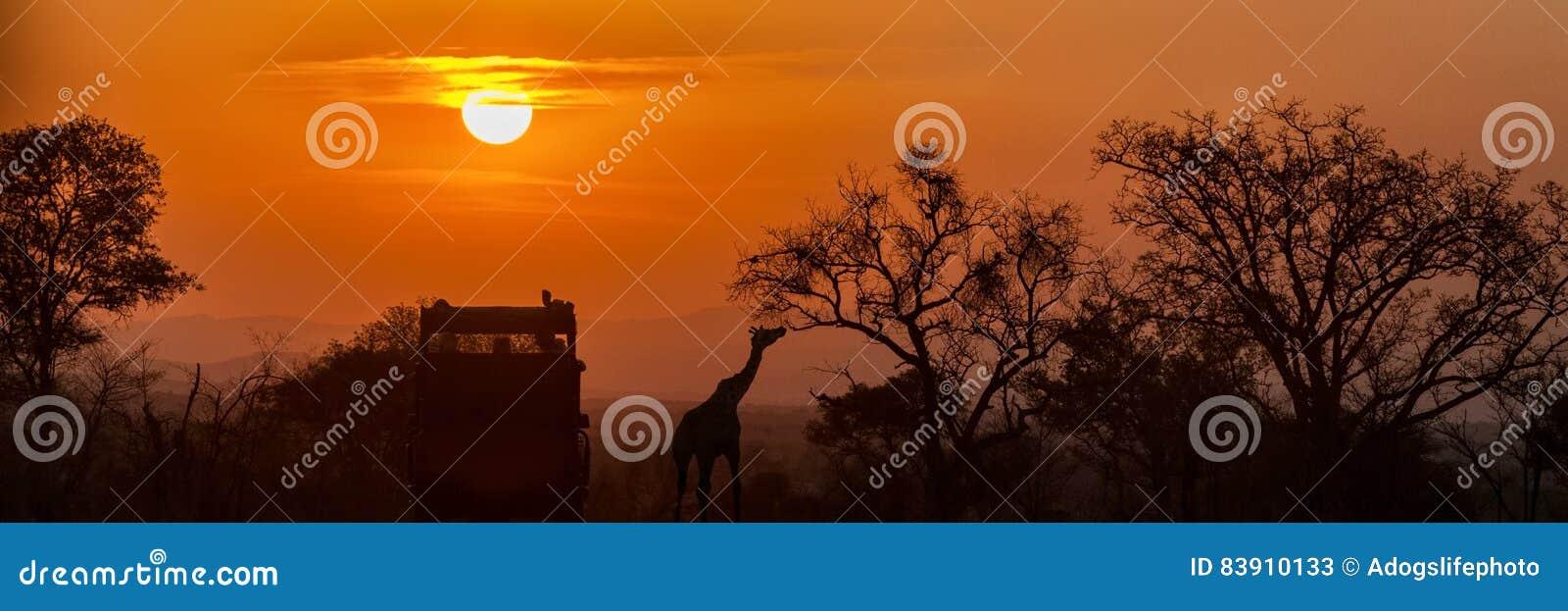 Αφρικανική σκιαγραφία ηλιοβασιλέματος σαφάρι
