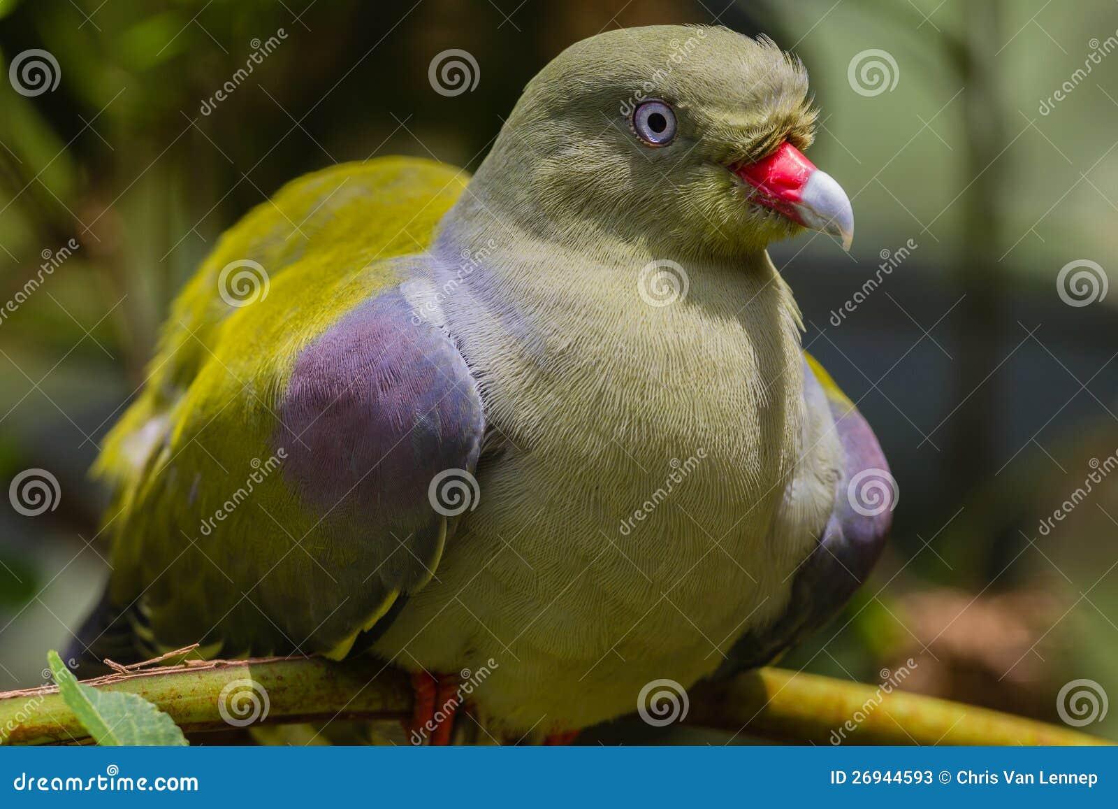 μεγάλο πουλί παίκτης μεγάλο μαύρο πουλί γκέι κακοποιούς