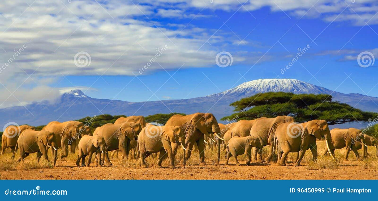 Αφρικανικό σαφάρι Κένυα ελεφάντων της Τανζανίας Kilimanjaro