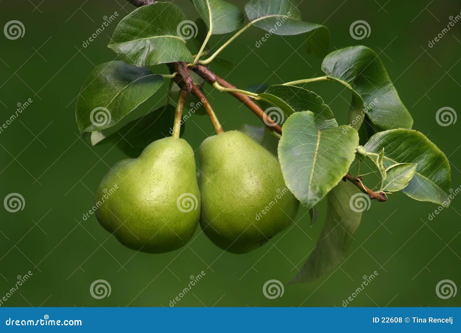 αχλάδια δύο