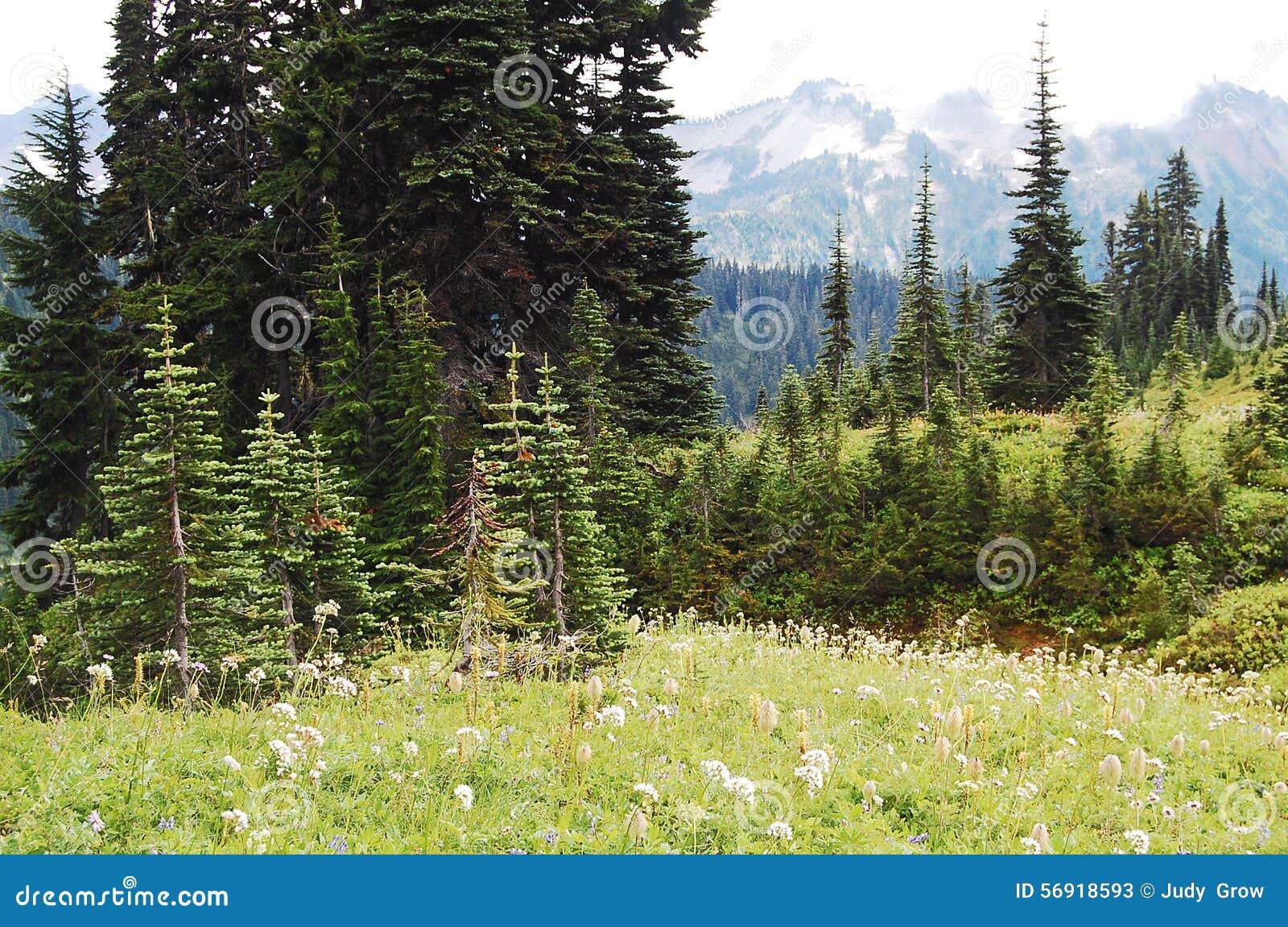 αλπικά λιβάδια δασών
