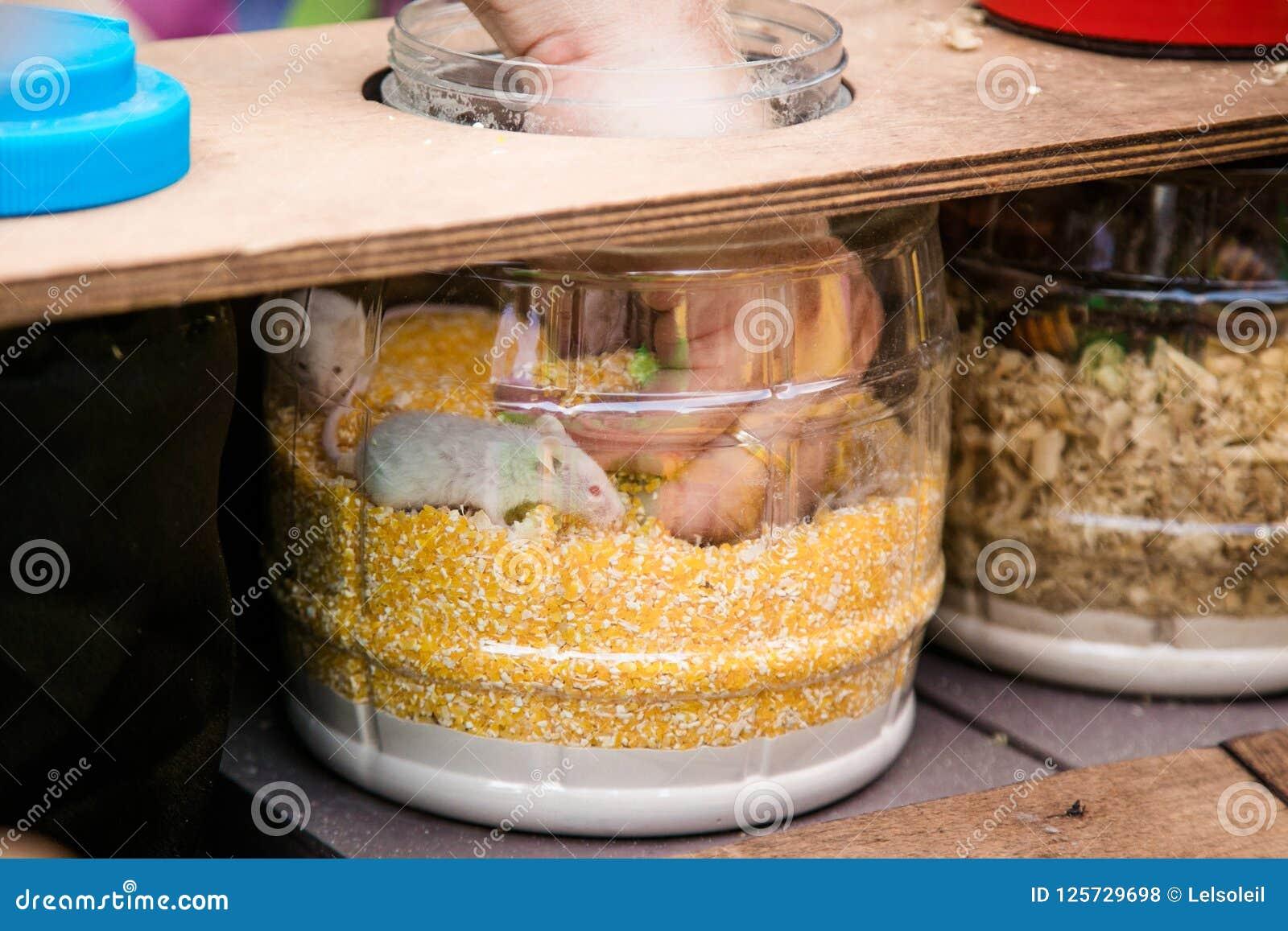 Βάζο με τις σφαίρες και mouses και το ανθρώπινο χέρι που βρίσκουν κάτι Αναζήτηση παιχνιδιών για τα παιδιά και τους ενηλίκους