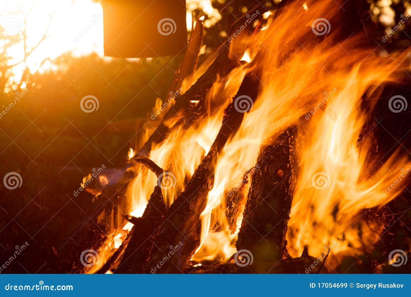 βάλτε φωτιά στο δάσος