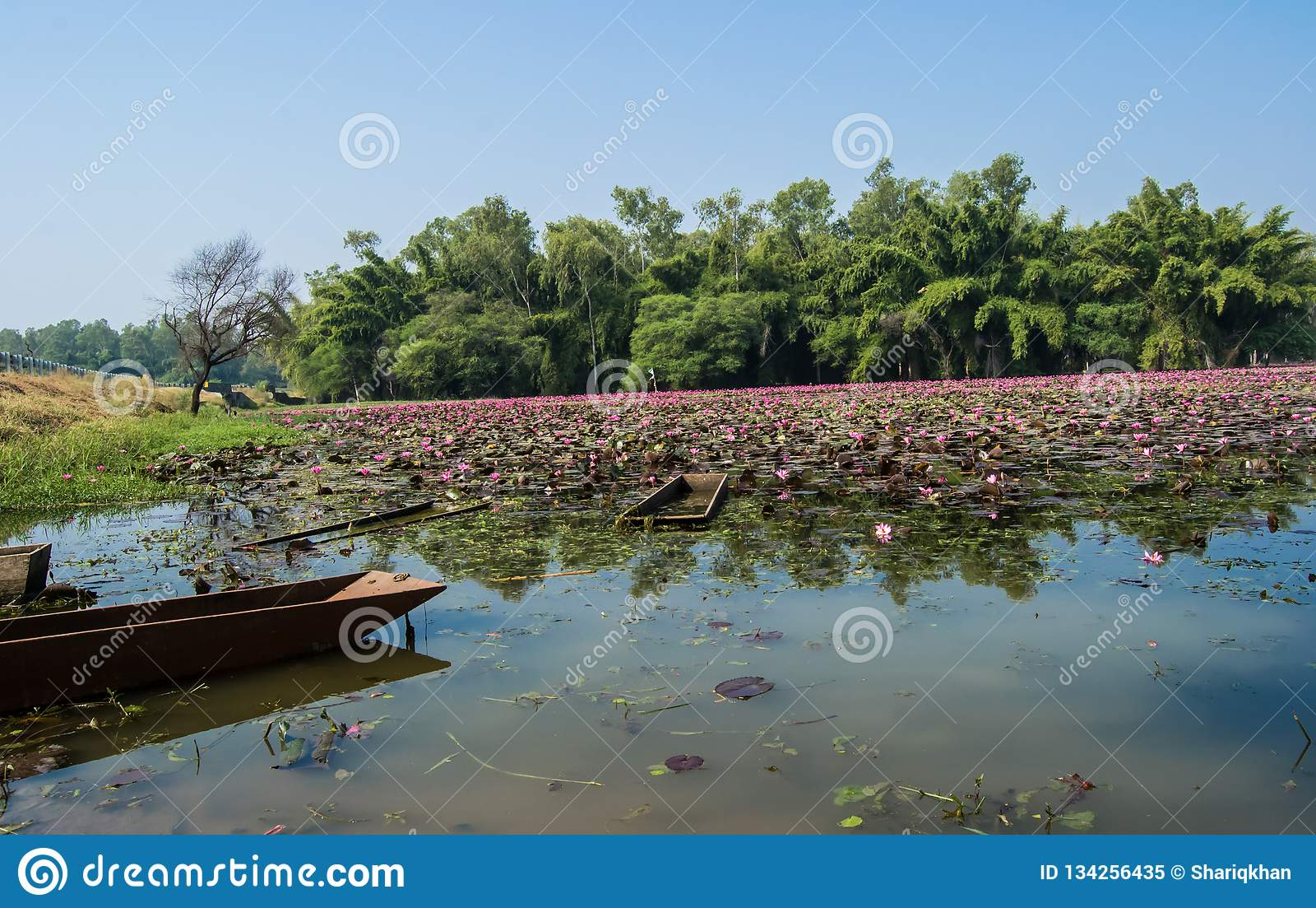 Βάρκα στα δέντρα και το τοπίο της Lilly ενός λιμνών νερού