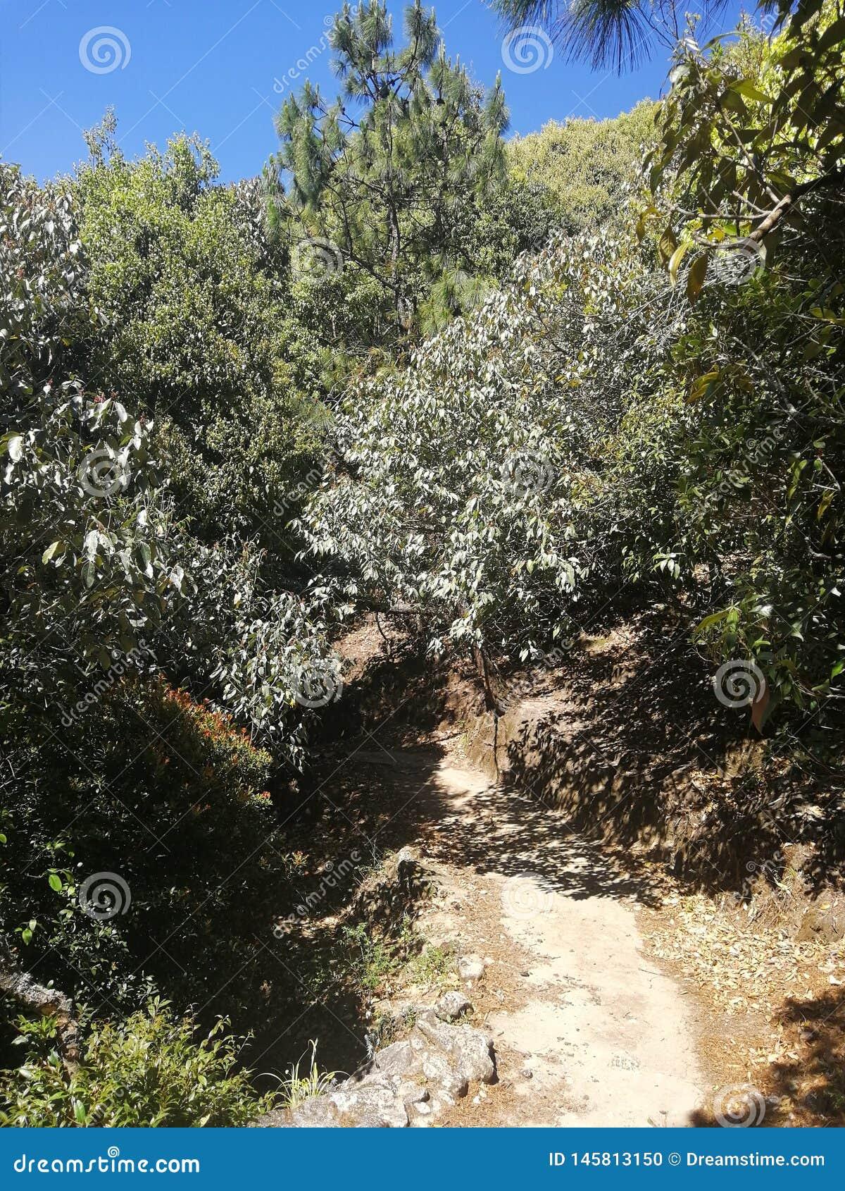 Βαθιά βουνά και δάση, το αρχικό οικολογικό περιβάλλον