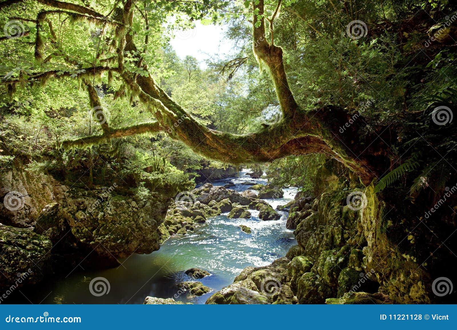 βαθύ δάσος