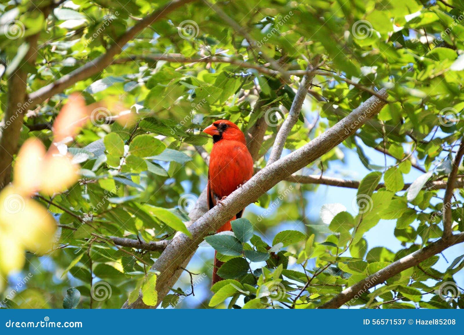 Download βασικό δέντρο στοκ εικόνα. εικόνα από birdbaths, έξυπνο - 56571537