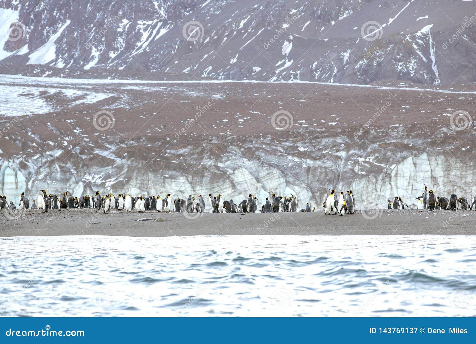 Βασιλιάς Penguins κοντά σε ένα παγόβουνο στη νότια Γεωργία