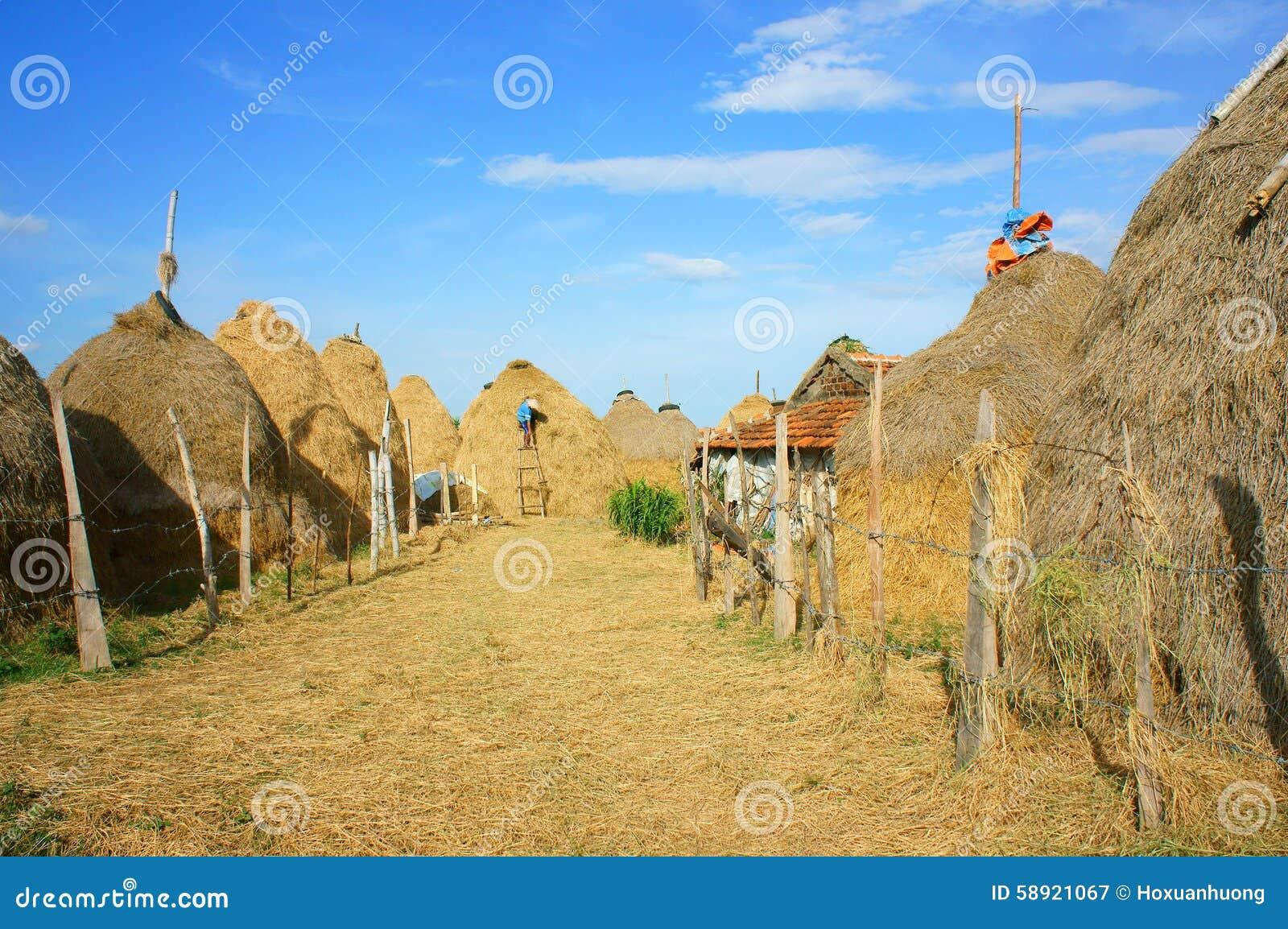 Βιετναμέζικο χωριό, σωρός του αχύρου, σταύλος, Βιετνάμ