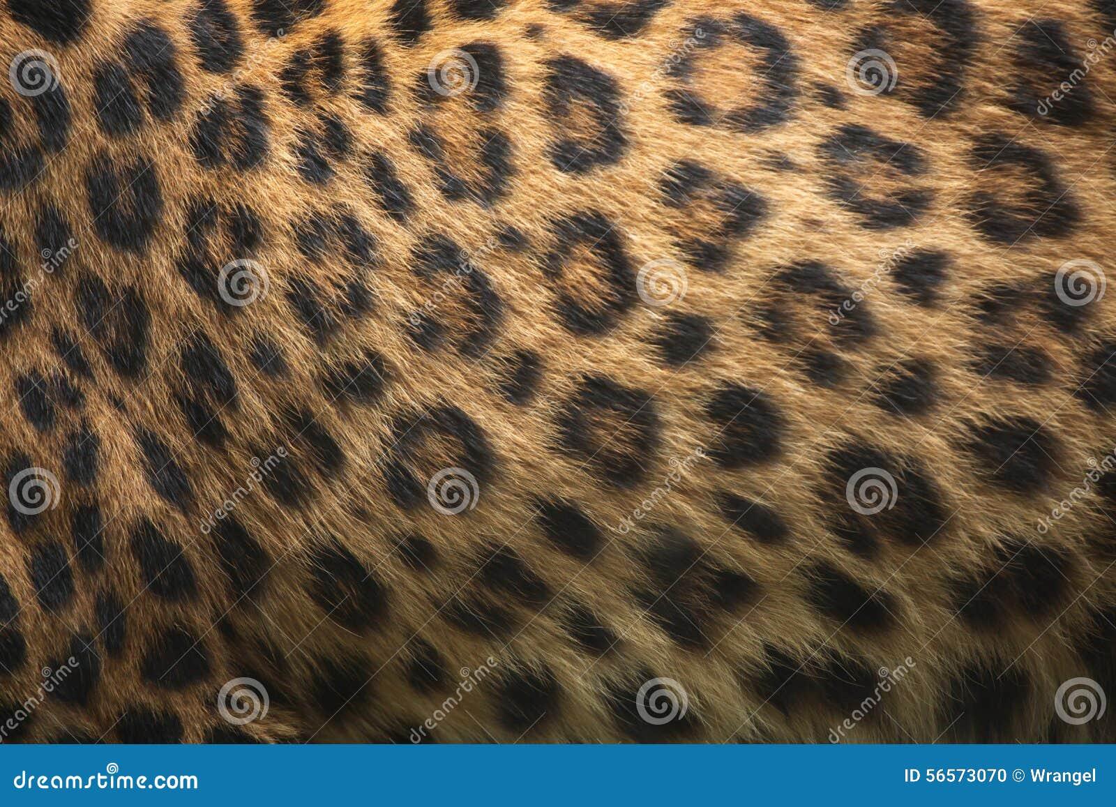 Download Βορράς-κινεζική σύσταση γουνών λεοπαρδάλεων (japonensis Pardus Panthera) Στοκ Εικόνες - εικόνα από πάνθηρας, ζωικός: 56573070