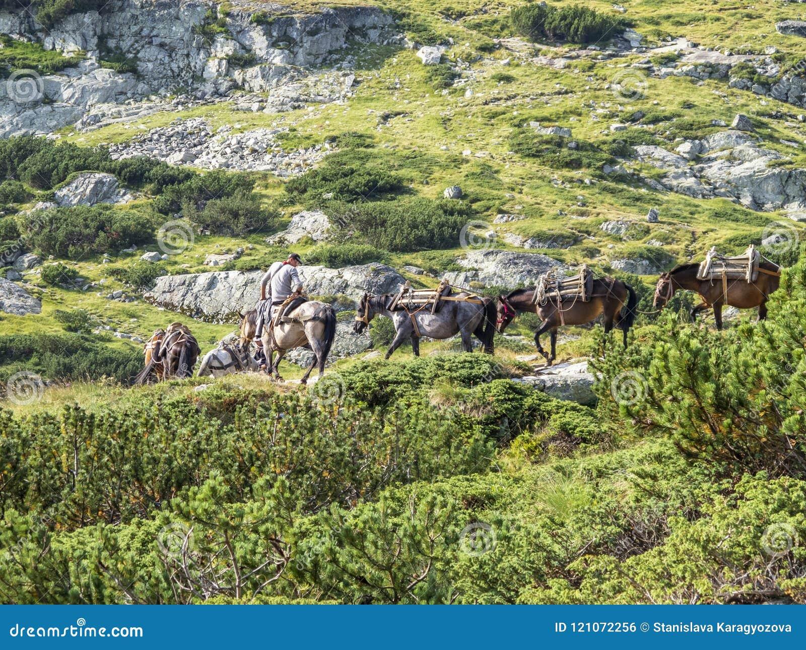 ΒΟΥΝΆ RILA, ΒΟΥΛΓΑΡΊΑ - 9 ΑΥΓΟΎΣΤΟΥ 2012: Ένας νεαρός άνδρας σε ένα άλογο οδηγεί μια συνοδεία αλόγων για αποσκευές υψηλών βουνών