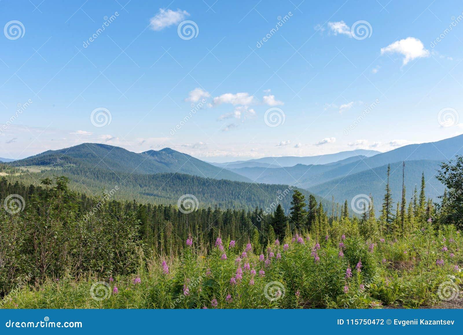 Βουνά Sayany Η διαδρομή θερινό ηλιόλουστο swallowtail χλόης ημέρας πεταλούδων Τοπίο