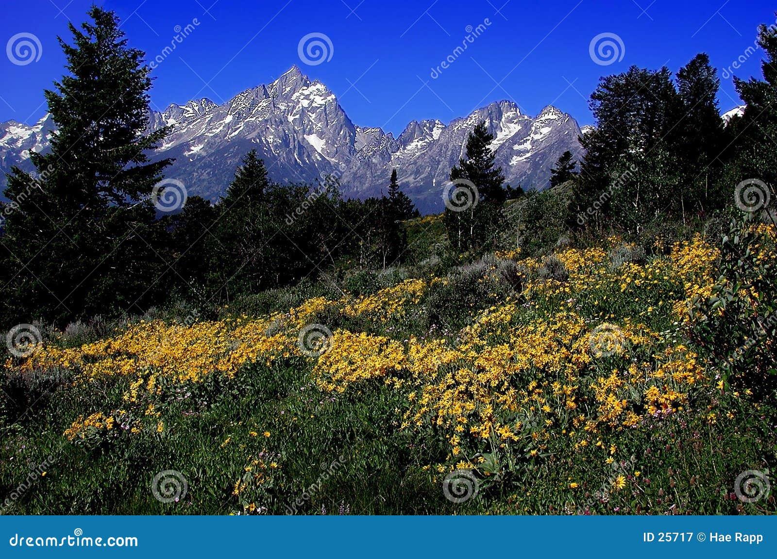βουνά teton