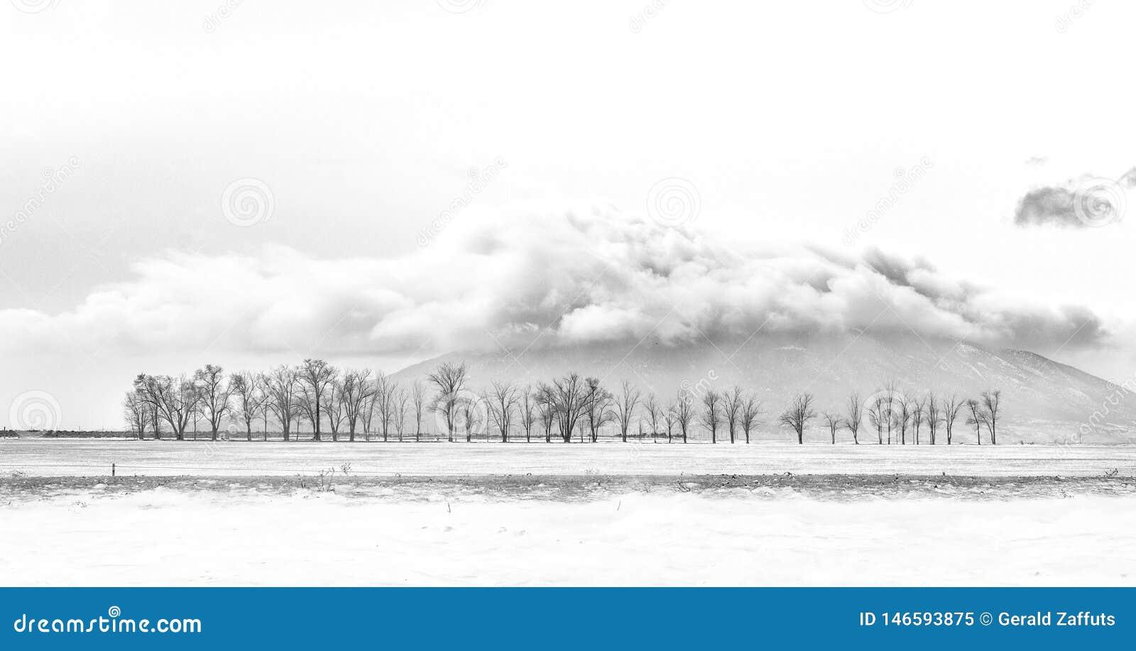 Βουνό της Ute με τα δέντρα και τα σύννεφα