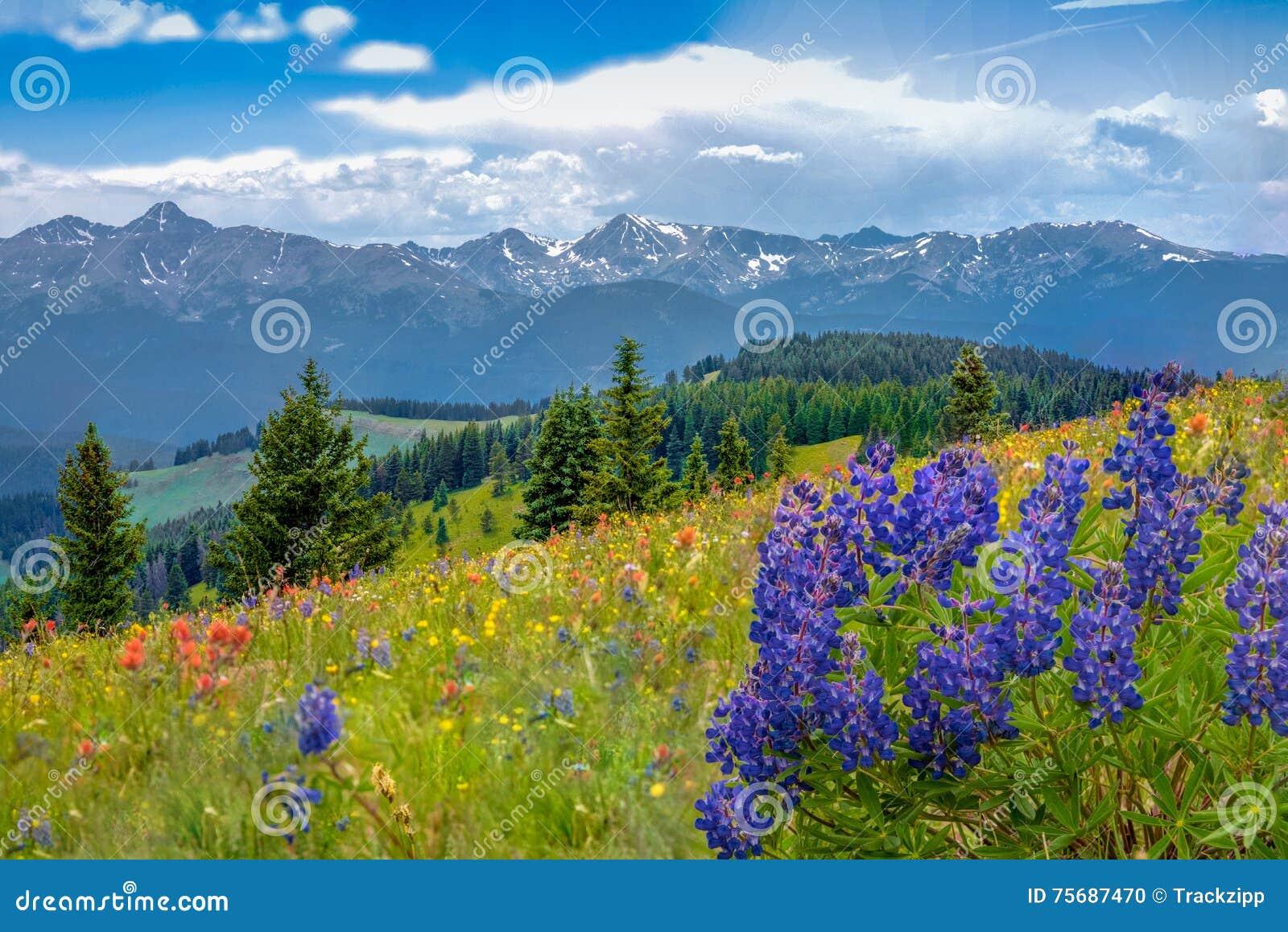 Βουνό Wildflowers