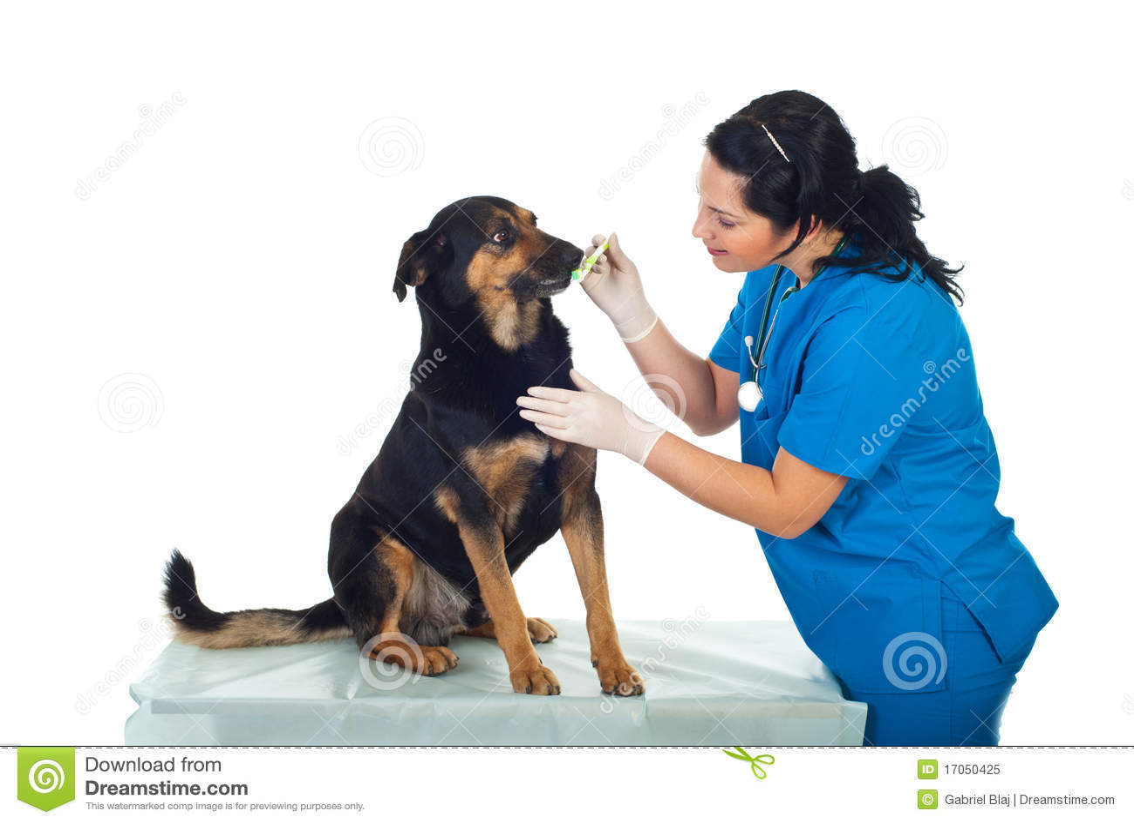 βουρτσίζοντας κτηνίατρο