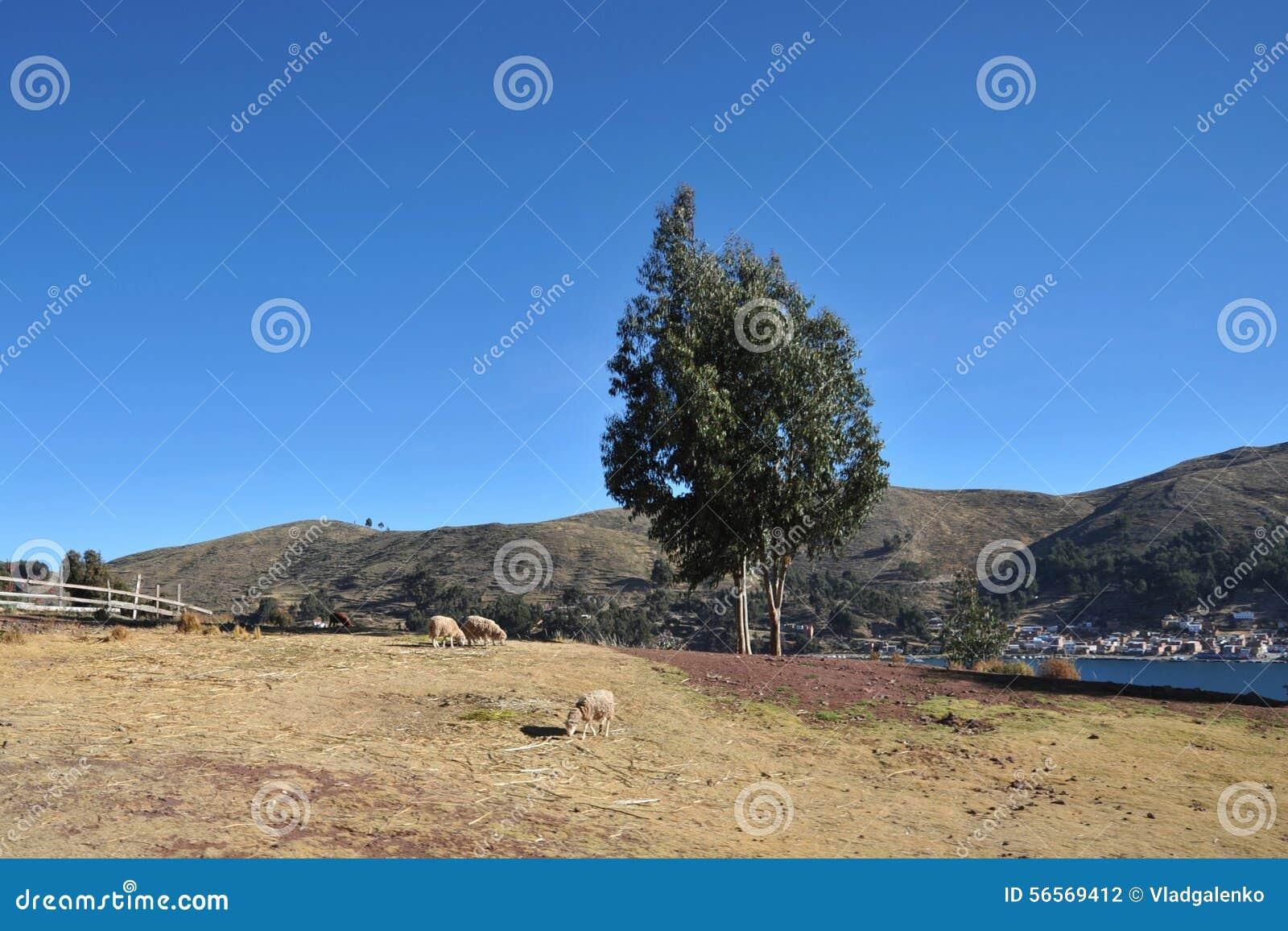 Download Βολιβιανό χωριό στις ακτές της λίμνης Titicaca Στοκ Εικόνες - εικόνα από ακτές, χωριό: 56569412