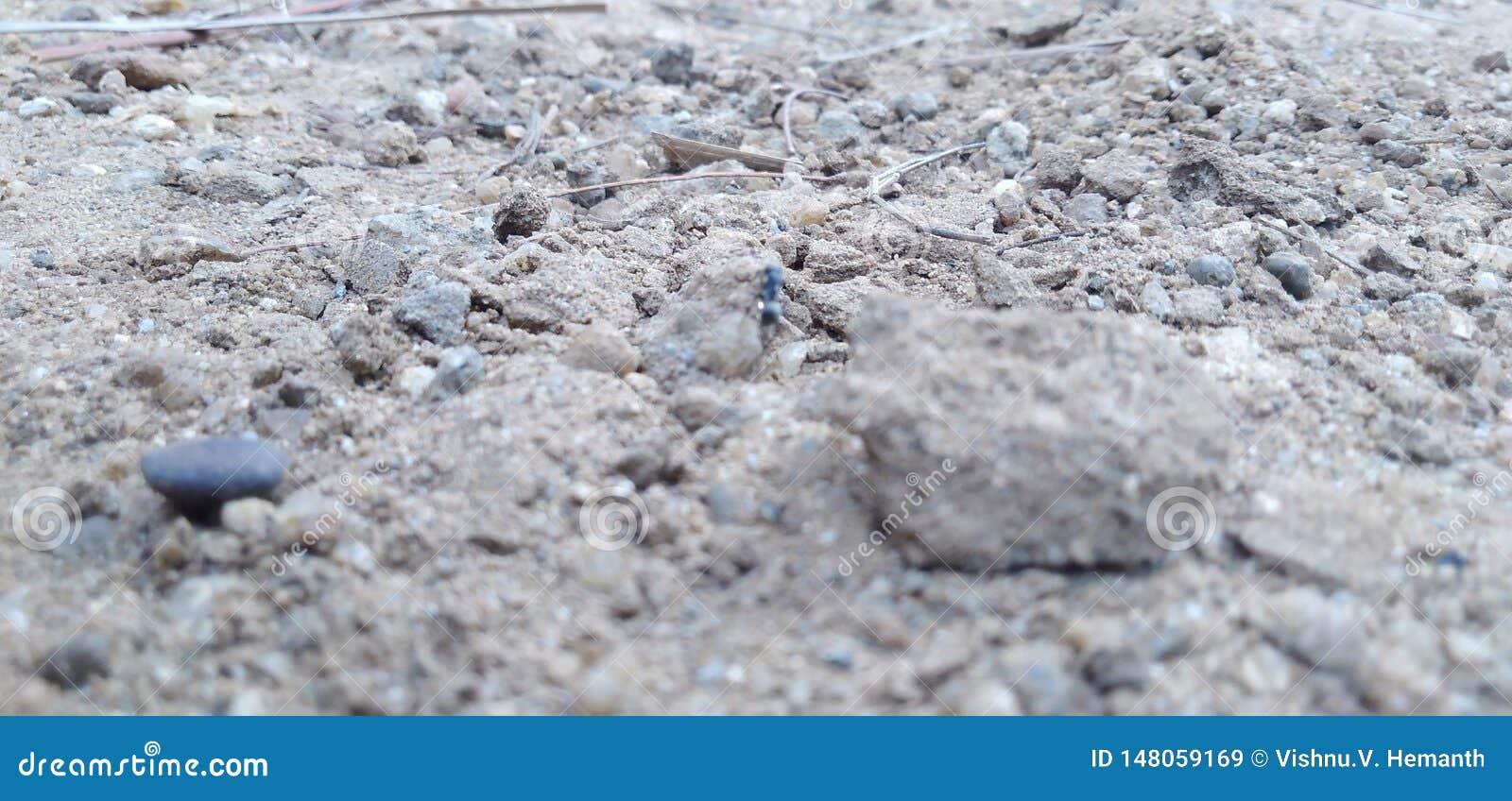 Βράχοι και ραβδιά και ένα μυρμήγκι και κάποια άμμος