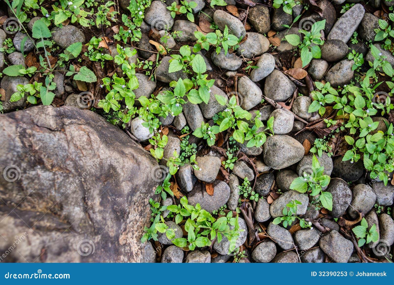 Βράχος και αμμοχάλικο