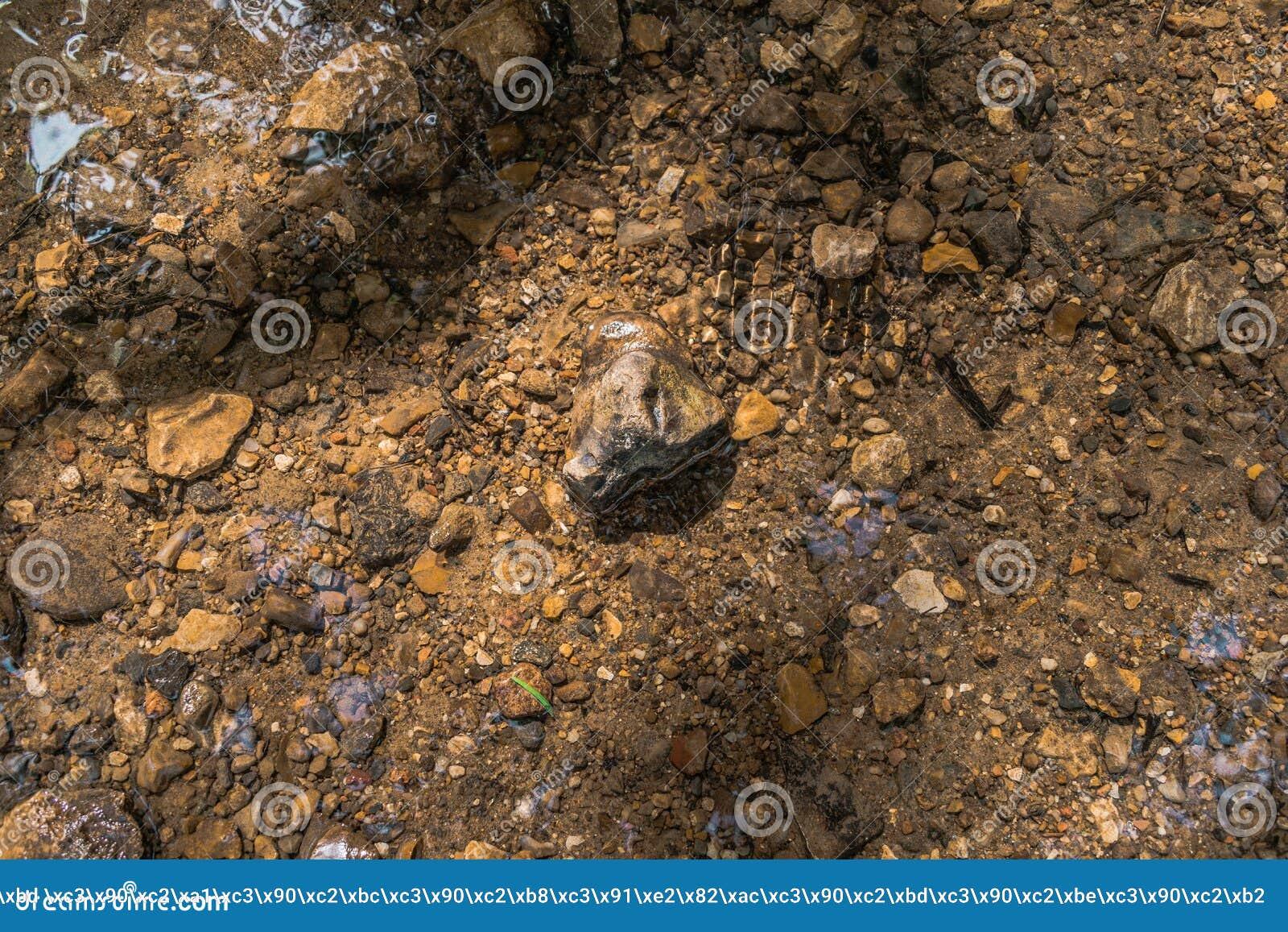 Βράχος που βάζει στο νερό ποταμού