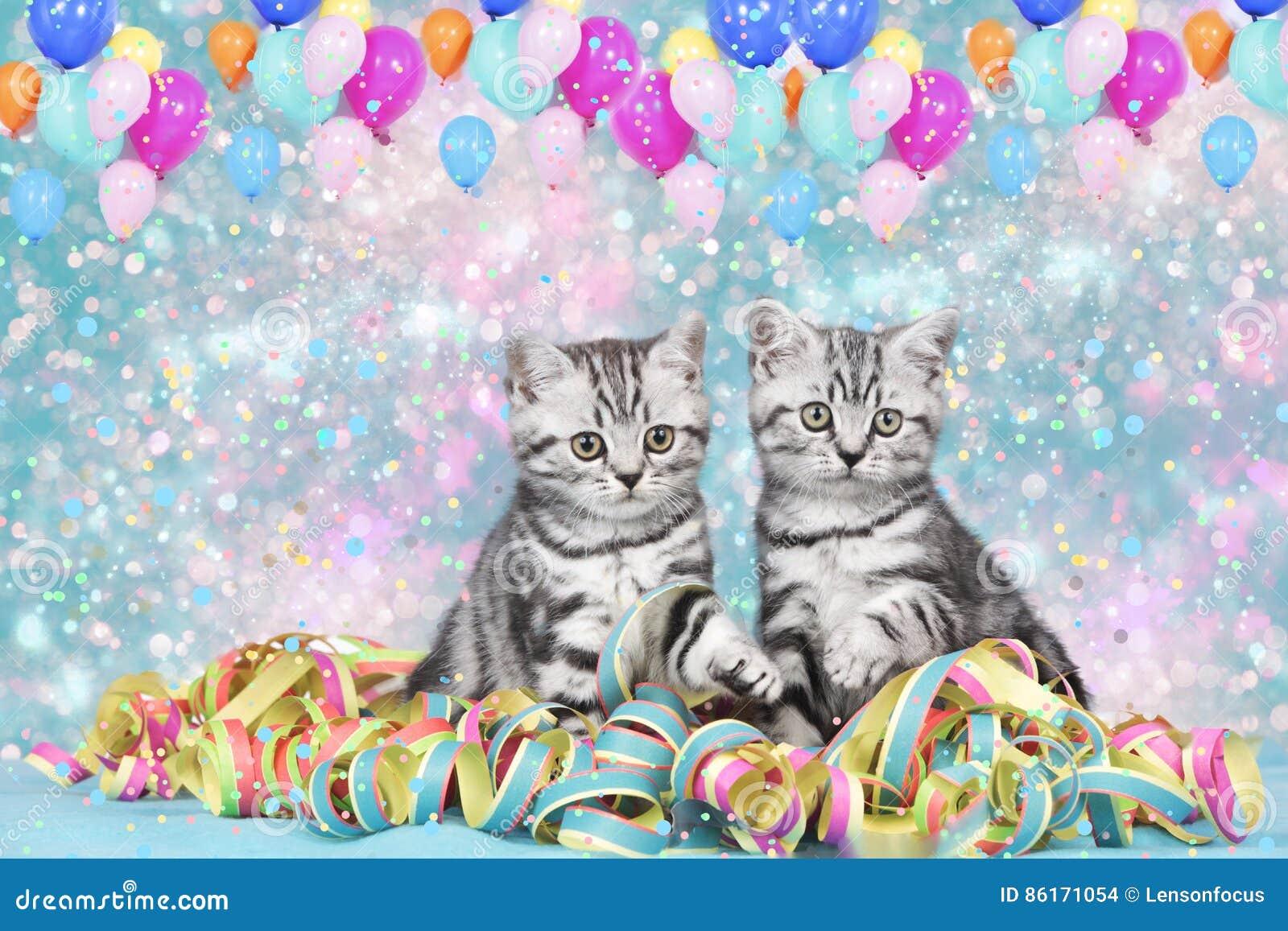 Βρετανικές γάτες shorthair με τις ταινίες