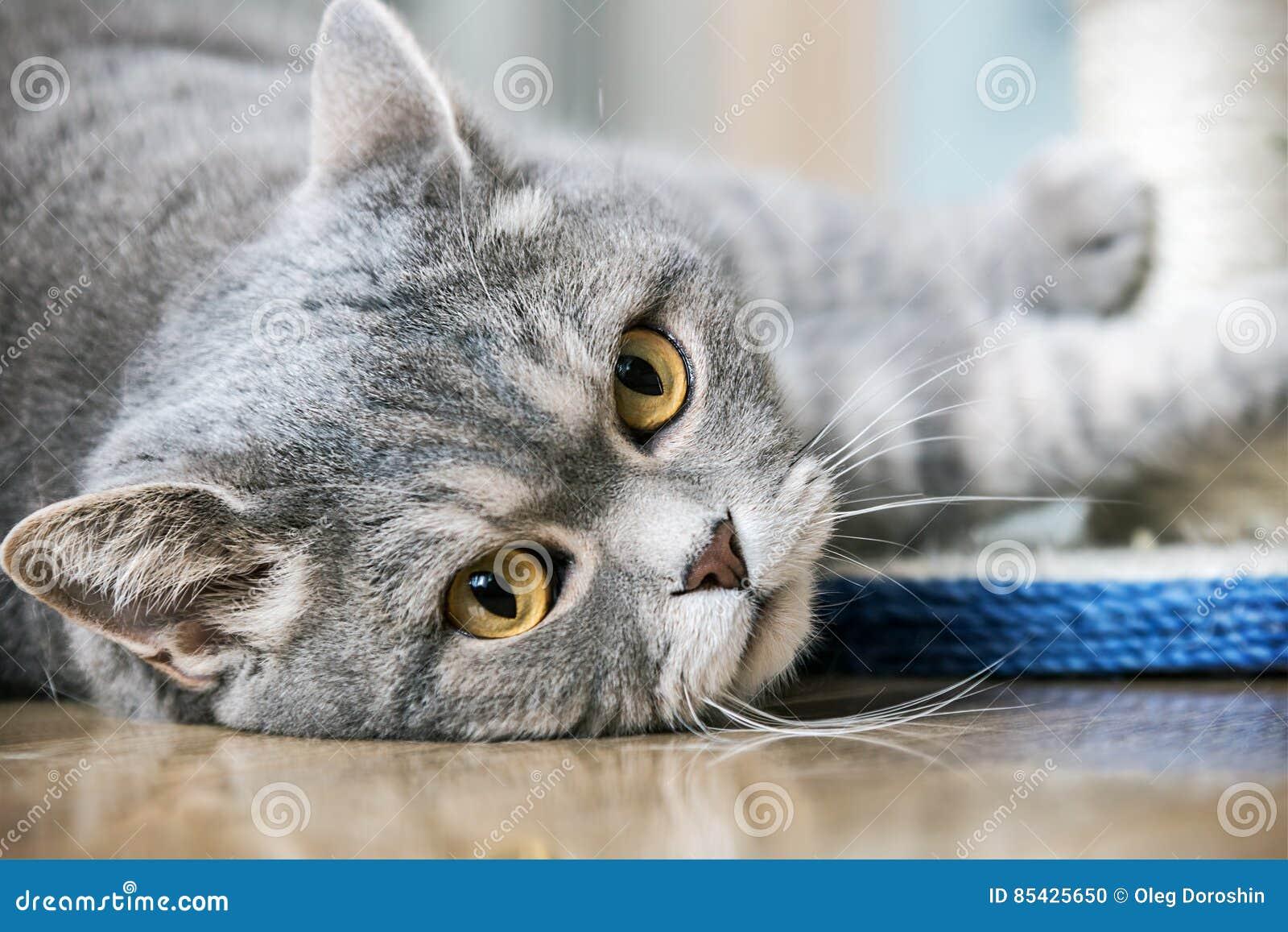 Βρετανικό παιχνίδι γατών ματιών