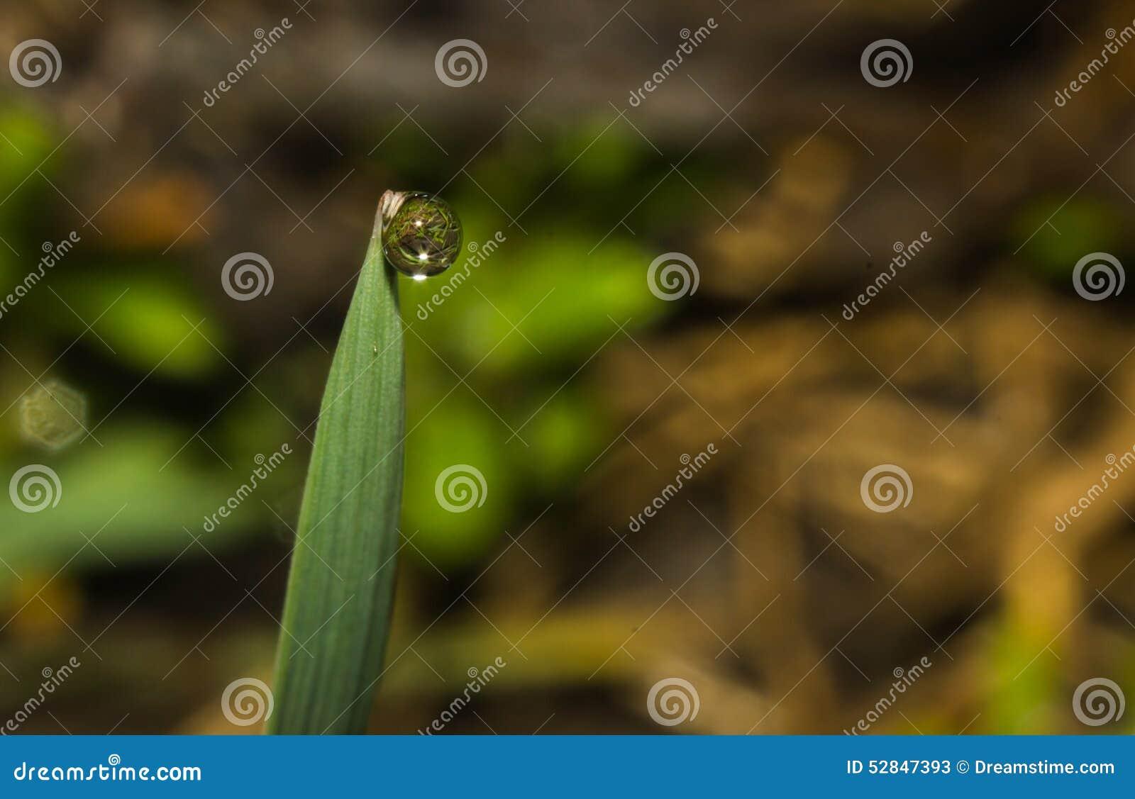 Βροχή άνοιξη