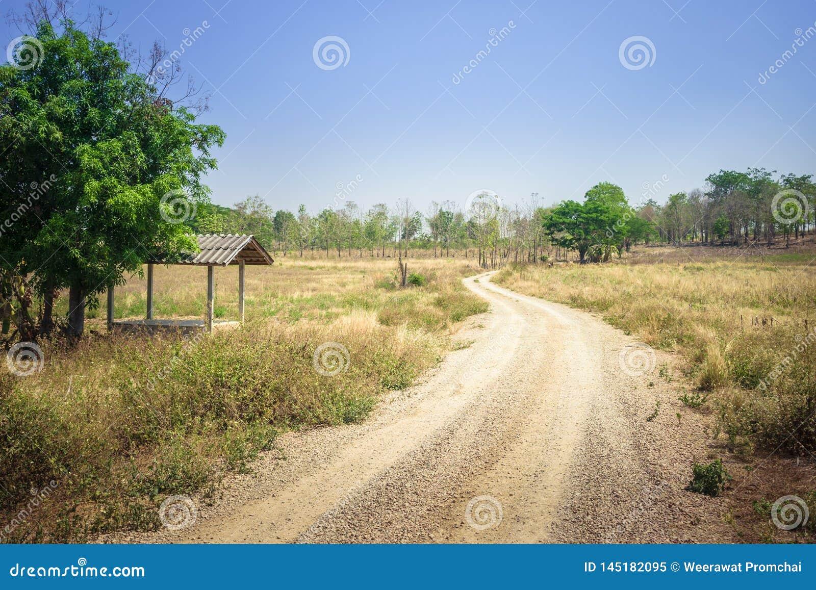Βρώμικος δρόμος προς το δάσος