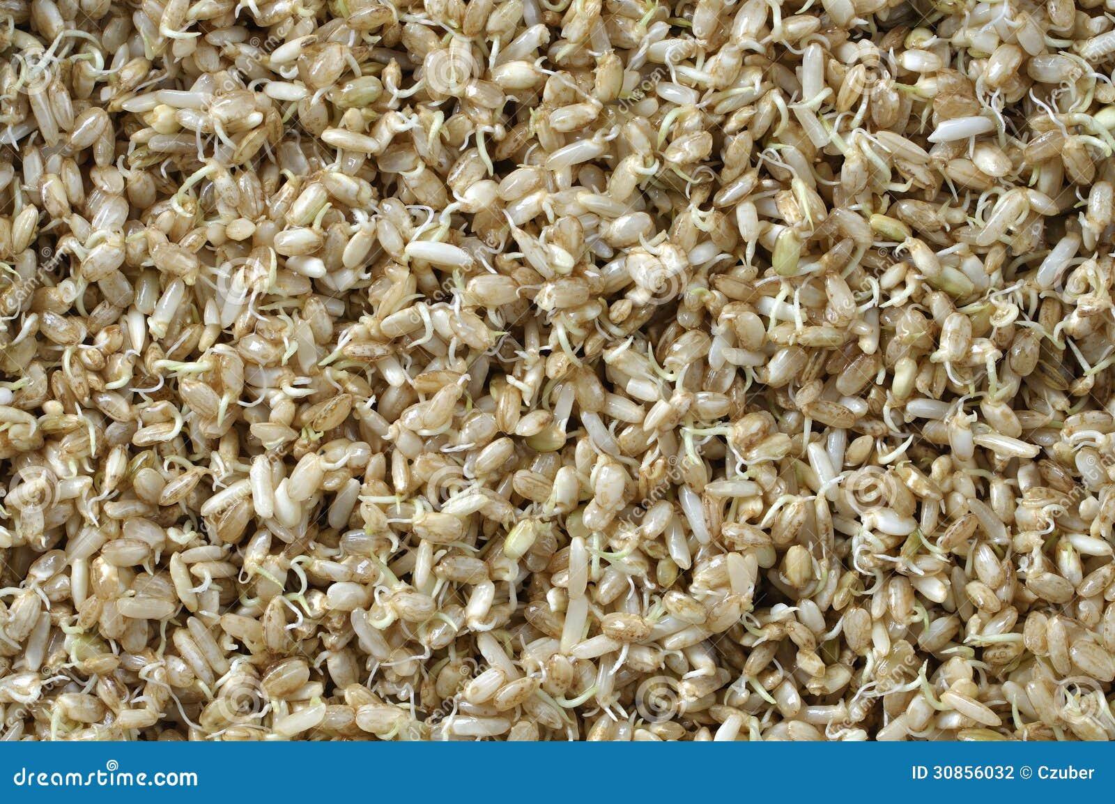 Βλαστημένο ρύζι
