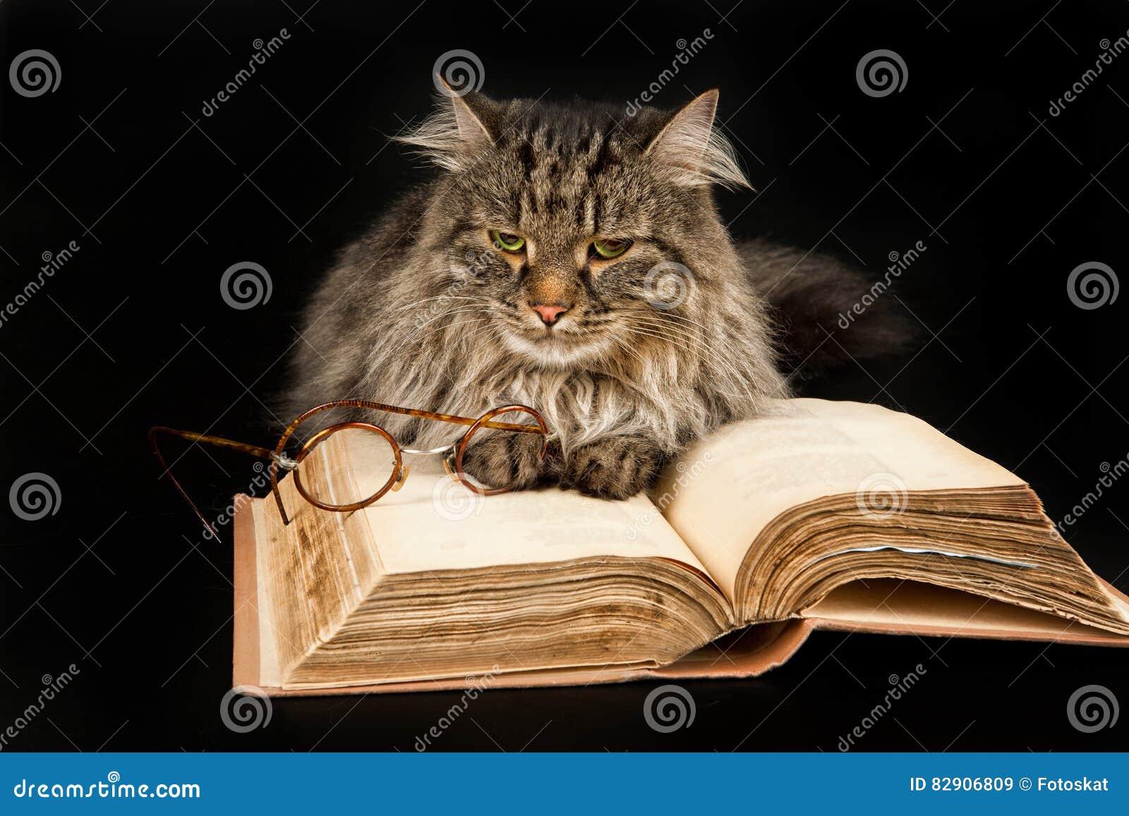 Γάτα, βιβλίο και γυαλιά