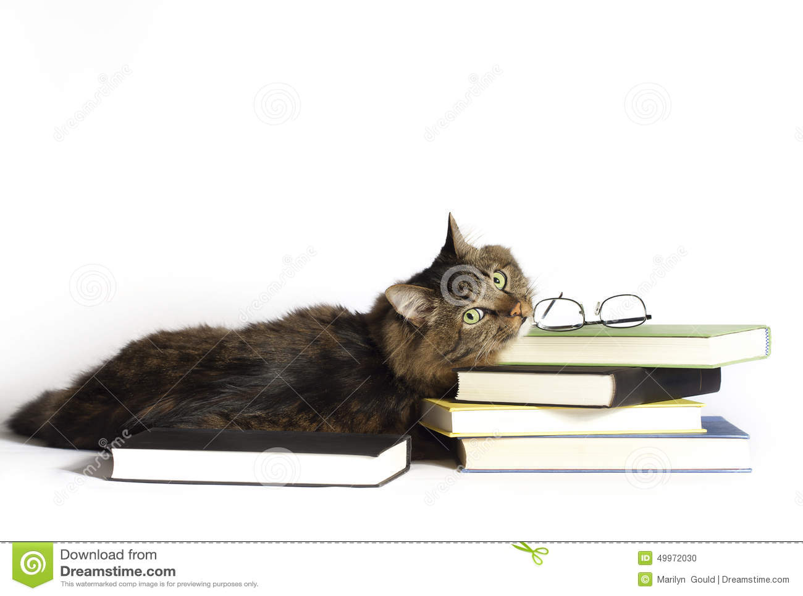 γάτα βιβλίων