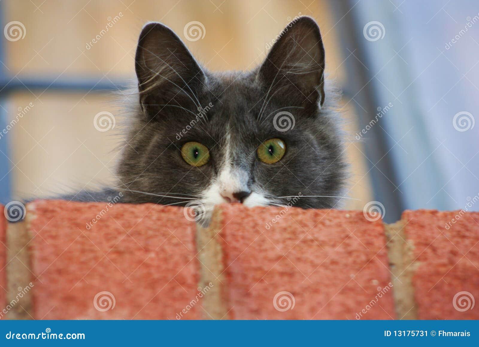 γάτα εσωτερική