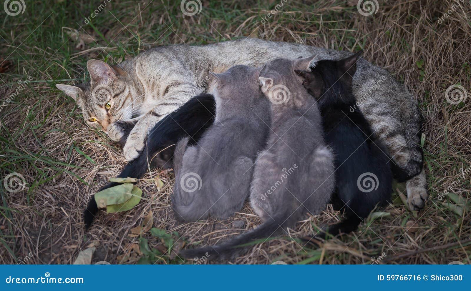 γάτα η περιποίηση γατακιών &t
