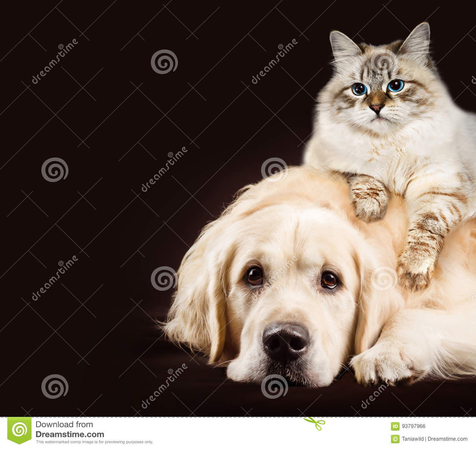 097c44454f97 Γάτα και σκυλί